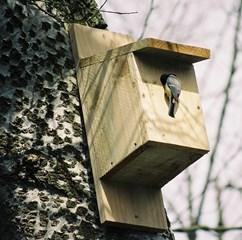 Bird Box Liffey Linear Park, Newbridge