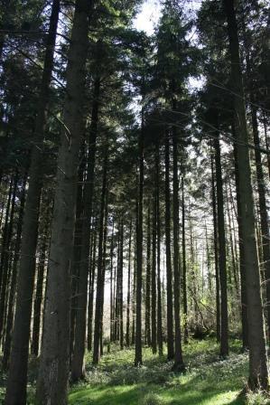 Hill of Allen Woodland