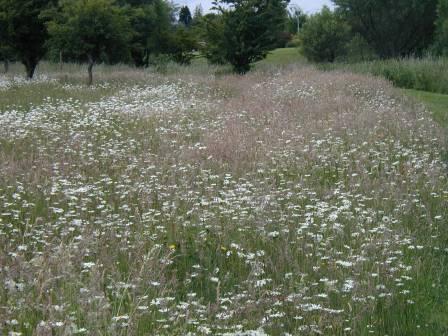 Wildflower / Wildgrass Area