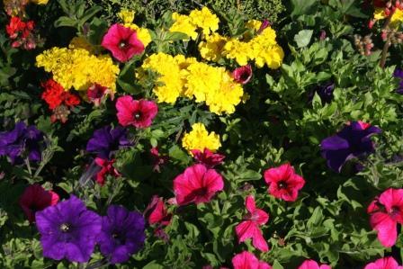 Newbridge in Bloom